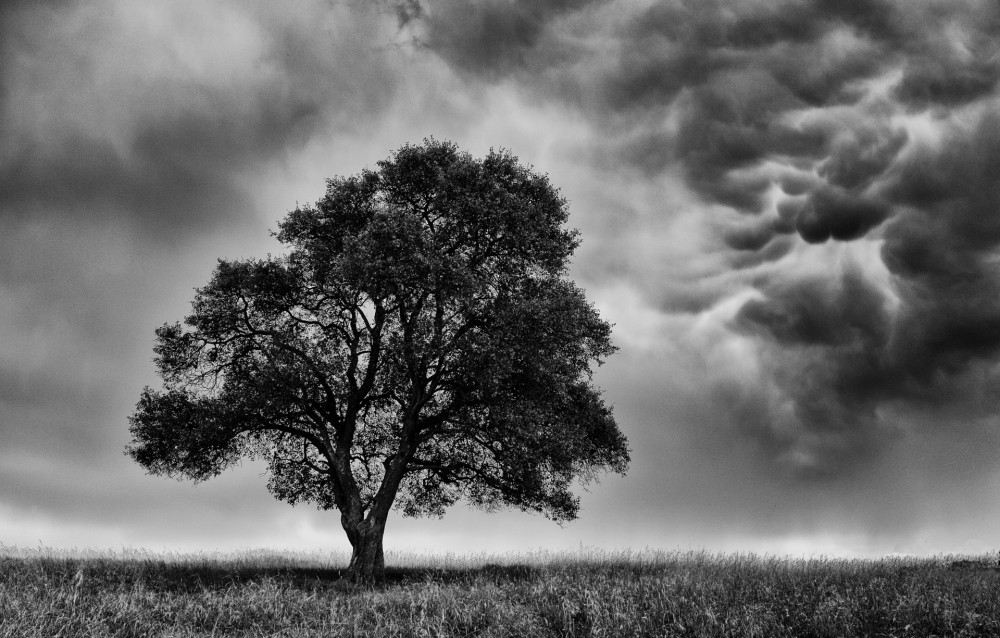 tree-before-storm